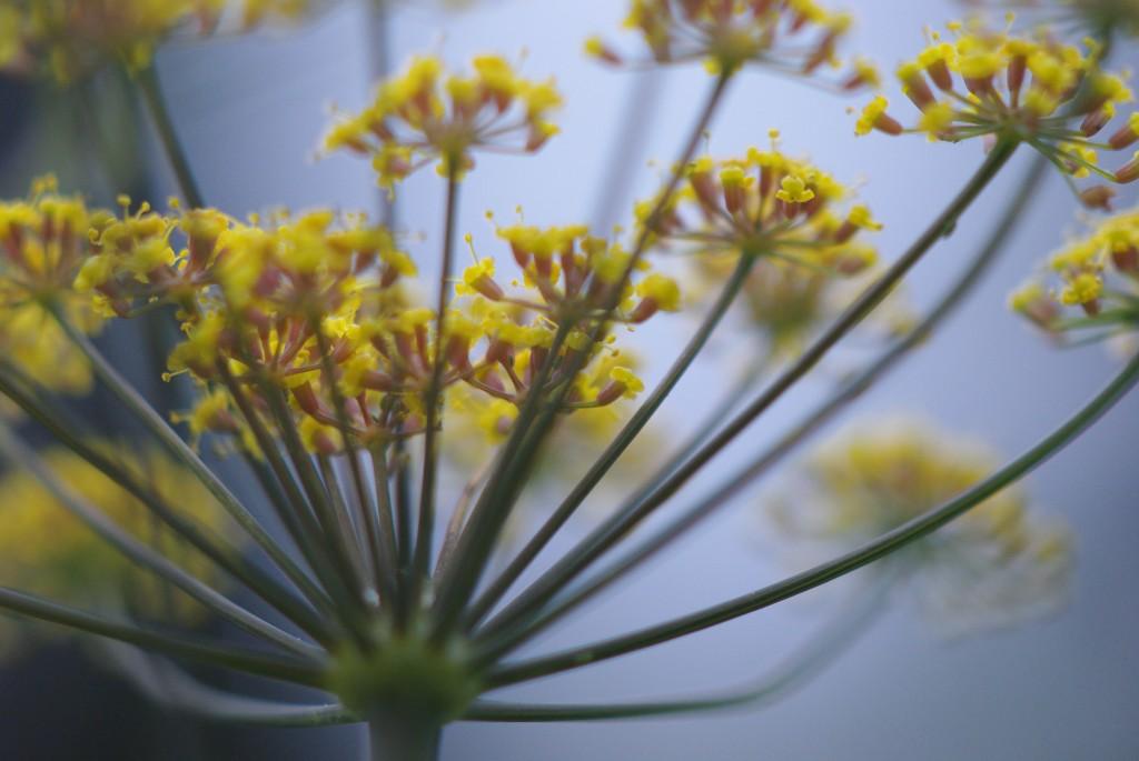 bloem botanische tuin - meditatievormen van Veelstemmig Licht