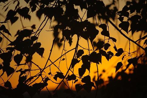 stilte - zonsondergang